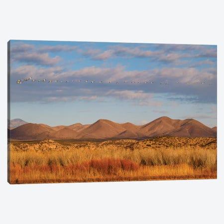 Bosque del Apache National Wildlife Refuge, Socorro County, New Mexico, USA Canvas Print #LDI24} by Larry Ditto Canvas Art Print