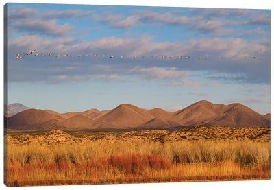 Bosque del Apache National Wildlife Refuge, Socorro County, New Mexico, USA Canvas Art Print