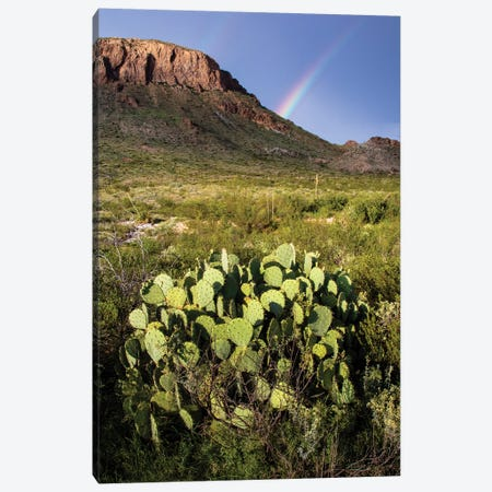Chihuahuan Desert. 3-Piece Canvas #LDI26} by Larry Ditto Art Print