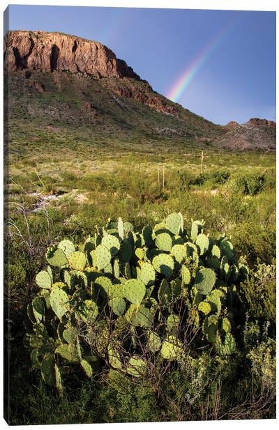 Chihuahuan Desert. Canvas Art Print