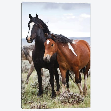 Wild Horses Roaming The Prairie, Cody, Park County, Wyoming, USA Canvas Print #LDI2} by Larry Ditto Canvas Art