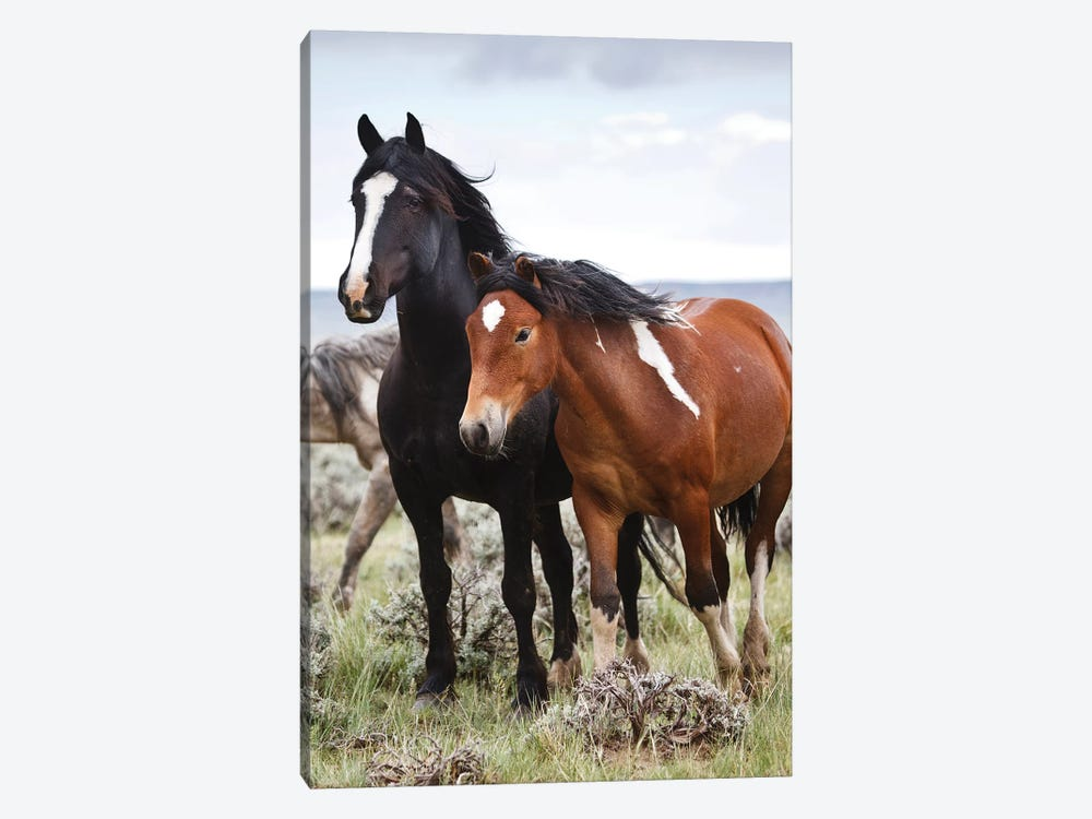 Wild Horses Roaming The Prairie, Cody, Park County, Wyoming, USA by Larry Ditto 1-piece Canvas Art