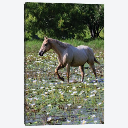 Horse wading in shallow pond. Canvas Print #LDI35} by Larry Ditto Canvas Artwork