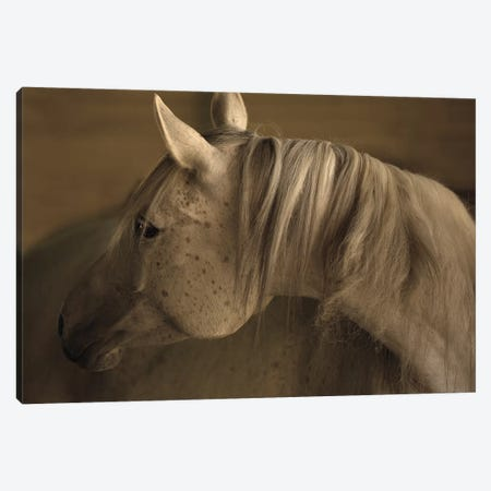 Light At Dusk Canvas Print #LDN13} by Sally Linden Canvas Artwork