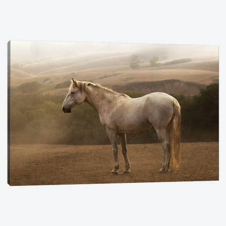 Morning Mist Canvas Print #LDN15} by Sally Linden Canvas Art Print