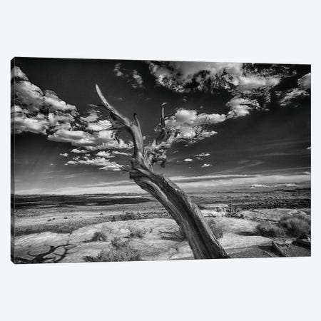 Desert Tree Canvas Print #LDN5} by Sally Linden Canvas Art