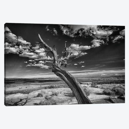 Desert Tree Canvas Print #LDN5} by Sally Linden Canvas Art