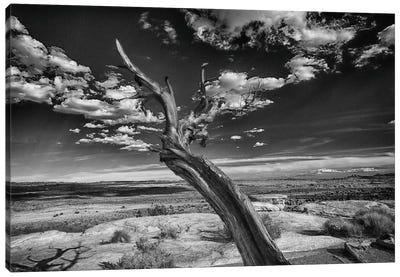 Desert Tree Canvas Art Print