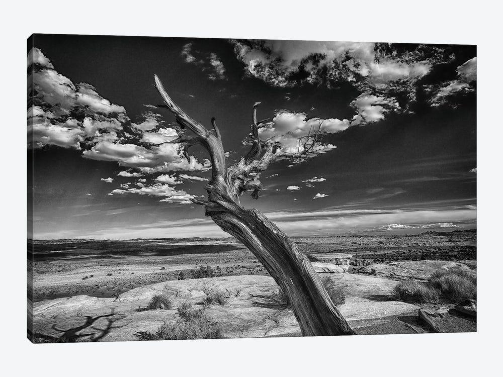 Desert Tree by Sally Linden 1-piece Canvas Art