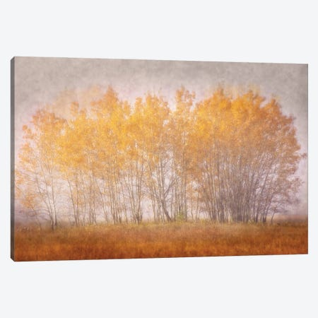 Muted Gold Canvas Print #LDR10} by Leda Robertson Canvas Art
