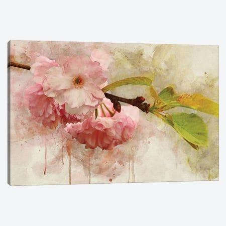 Blossom Elegance I Canvas Print #LDR15} by Leda Robertson Canvas Print