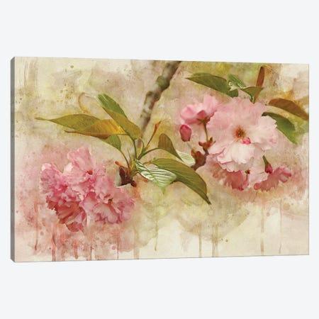 Blossom Elegance II Canvas Print #LDR16} by Leda Robertson Canvas Art Print