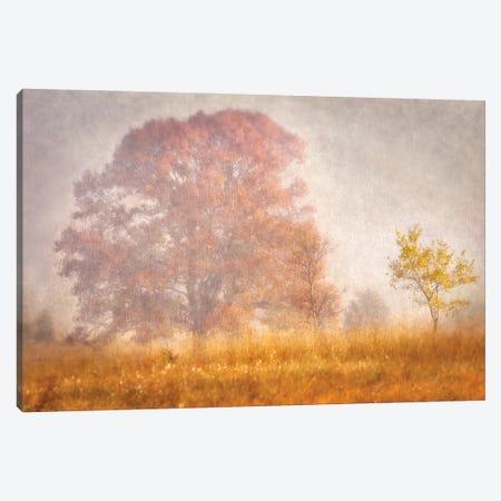 Autumn Mist Canvas Print #LDR1} by Leda Robertson Canvas Wall Art