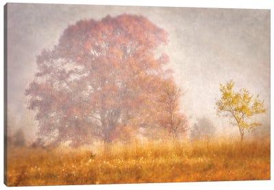 Autumn Mist Canvas Art Print