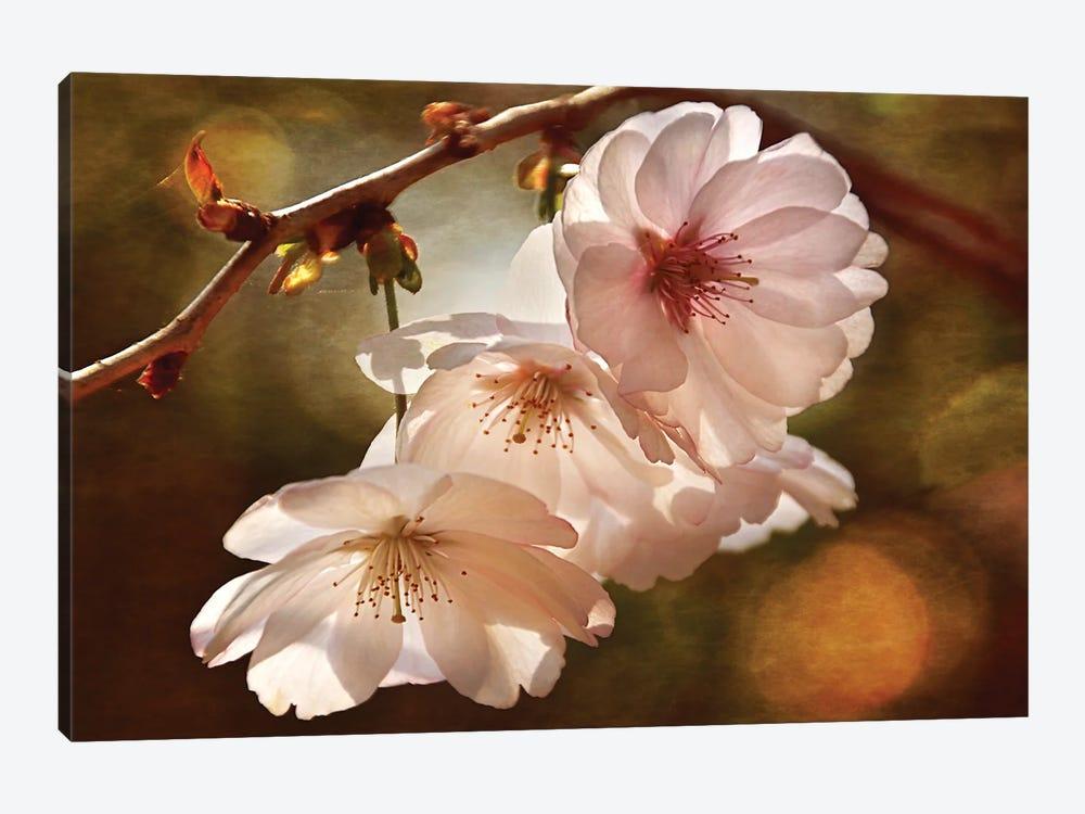 Cherry Blossom Illumination by Leda Robertson 1-piece Canvas Art Print