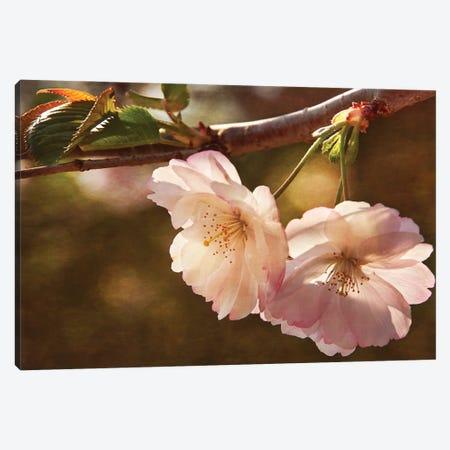 Cherry Blossom Joy Canvas Print #LDR3} by Leda Robertson Canvas Wall Art