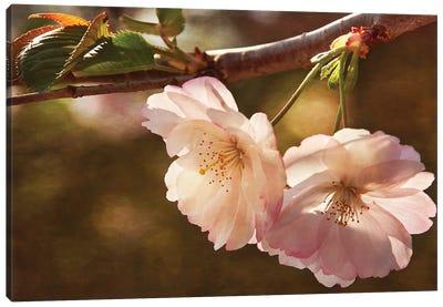 Cherry Blossom Joy Canvas Art Print