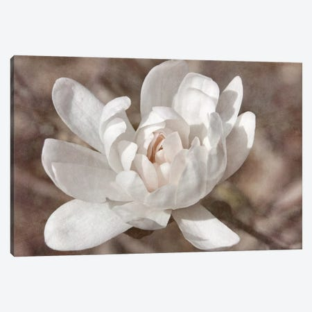 Many-petaled Magnolia Canvas Print #LDR5} by Leda Robertson Canvas Print