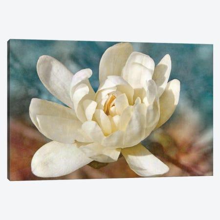 Many-petaled Magnolia Canvas Print #LDR6} by Leda Robertson Canvas Art Print