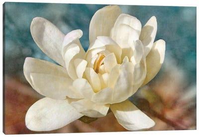 Many-petaled Magnolia Canvas Art Print