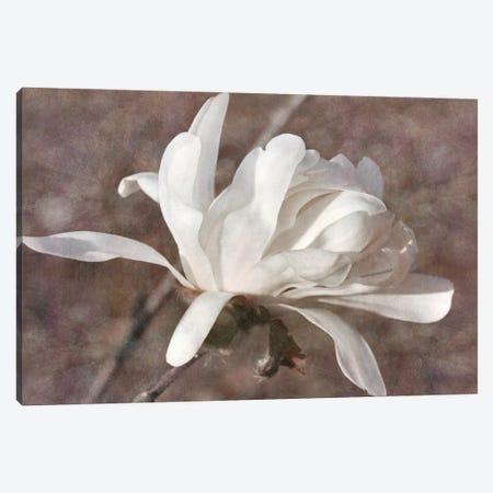 Morning Magnolia Canvas Print #LDR8} by Leda Robertson Canvas Wall Art