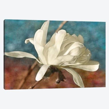 Morning Magnolia Canvas Print #LDR9} by Leda Robertson Canvas Wall Art