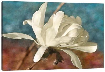 Morning Magnolia Canvas Art Print