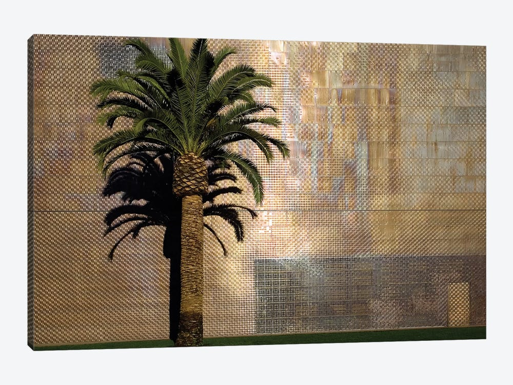 Lone Palm Tree, M.H. de Young Memorial Museum, Golden Gate Park, San Francisco, California, USA by Jim Goldstein 1-piece Canvas Wall Art