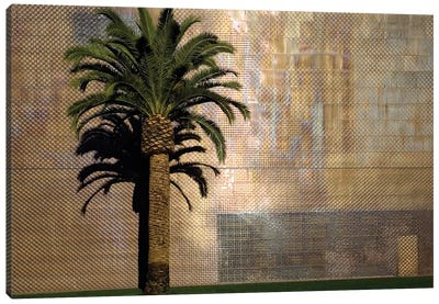 Lone Palm Tree, M.H. de Young Memorial Museum, Golden Gate Park, San Francisco, California, USA Canvas Art Print