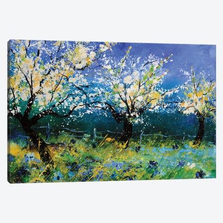 Apple trees in spring Canvas Print #LDT160} by Pol Ledent Art Print
