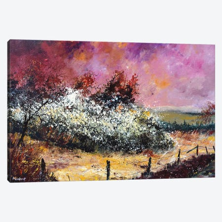Hawthorn In Blossom Canvas Print #LDT172} by Pol Ledent Canvas Art