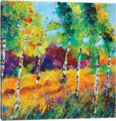 Aspen Trees Canvas Art Print