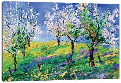 Orchard In Spring Canvas Art Print