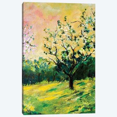 Appletree In Spring Canvas Print #LDT225} by Pol Ledent Canvas Print