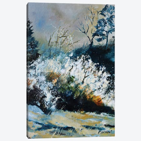 Blossoming Hawthorn Canvas Print #LDT232} by Pol Ledent Canvas Art Print