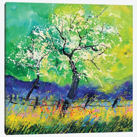 Blossom Canvas Print #LDT288} by Pol Ledent Canvas Wall Art