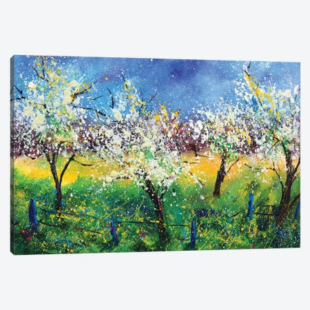 Blooming apple trees Canvas Print #LDT76} by Pol Ledent Canvas Print