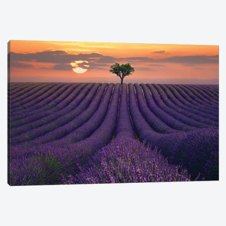 For the Love of Lavender 3-Piece Canvas #LEE13} by Lee Sie Canvas Wall Art
