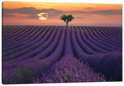 For the Love of Lavender Canvas Art Print