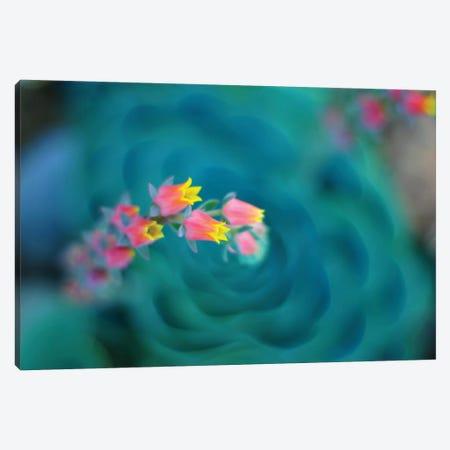 Rosularia Canvas Print #LEE14} by Lee Sie Canvas Art Print