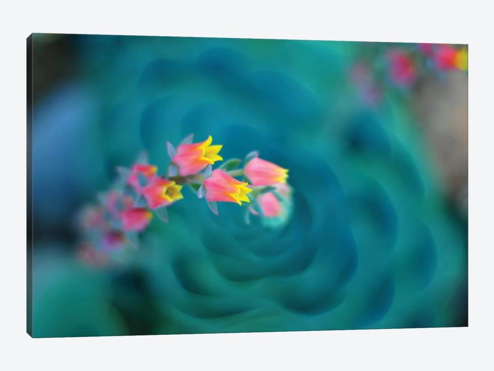 Rosularia by Lee Sie 1-piece Canvas Art Print