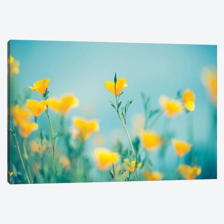 California Dream Canvas Print #LEE2} by Lee Sie Canvas Print