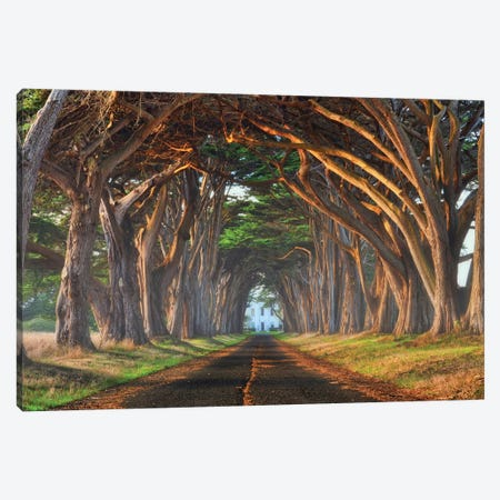 Tunnel Of Light 3-Piece Canvas #LEE9} by Lee Sie Art Print