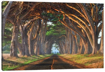 Tunnel Of Light Canvas Art Print