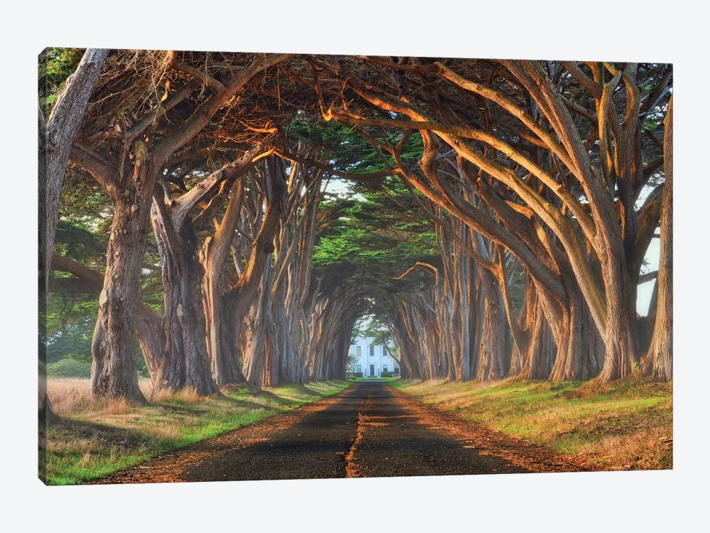 Tunnel Of Light by Lee Sie 1-piece Canvas Artwork