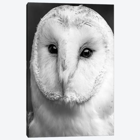 Owl Close Up Canvas Print #LEH121} by Leah Straatsma Canvas Art