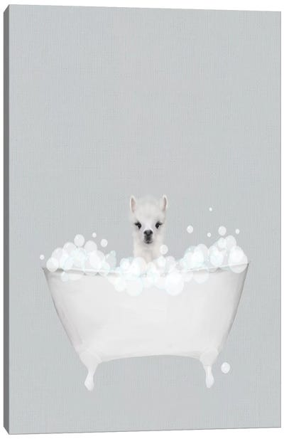 Alpaca Blue Bath Canvas Art Print