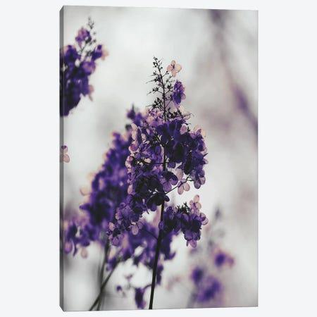Purple Dried Hydrangea Canvas Print #LEH132} by Leah Straatsma Art Print