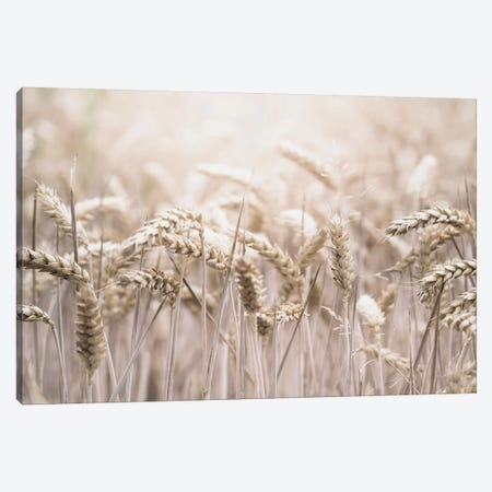 Wheat 3-Piece Canvas #LEH171} by Leah Straatsma Canvas Print