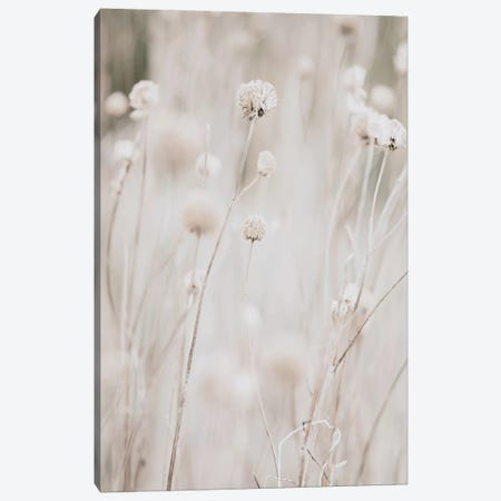 White Dried Wildflowers 3-Piece Canvas #LEH172} by Leah Straatsma Canvas Print